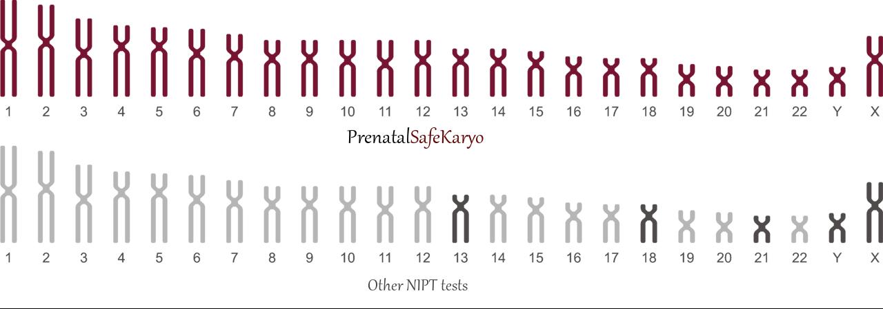 24 chromosomes other NIPT wo logo